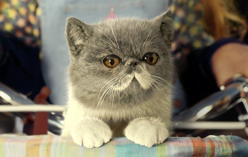 Three's Kitty is still considering his options